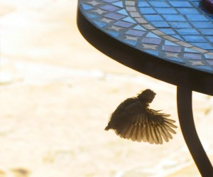 The baby flies under a patio table.
